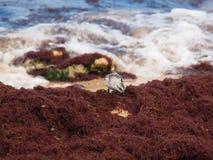 Coureur de plage Image stock