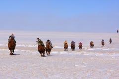 Coureurs de chameau de Naadam Images stock