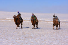 Coureurs de chameau de Naadam Photographie stock libre de droits