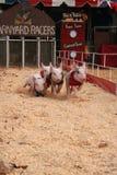 Coureurs de porc de cour Photos libres de droits