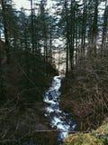Courez la rivière Images stock