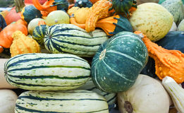 Courge Photo libre de droits