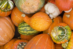 Courge Photographie stock
