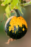 Courge Photos libres de droits