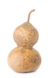 courge bouteille Image stock