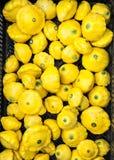 Courge d'été jaune Photos libres de droits