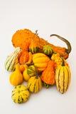 Courge d'automne Photo libre de droits