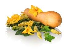 Courge de Butternut avec des feuilles de vert et des fleurs énormes image stock