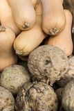 Courge de Butternut et céleris-raves Image stock