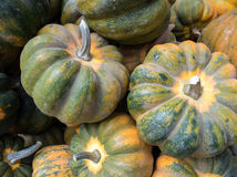 Courge de gland Images stock