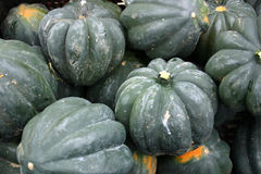 Courge de gland Photo stock
