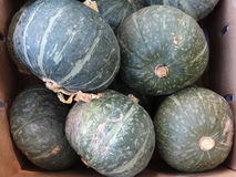 Courge de Kabocha Images stock