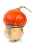 Courge de turban Images libres de droits