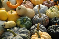 Courge et potirons Photographie stock