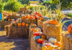 Courge et potirons colorés multi pour Halloween et thanksgiving Image libre de droits