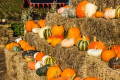 Courge et potirons pour Halloween Photographie stock