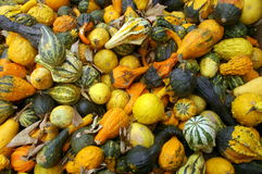 Courge Fest Image stock