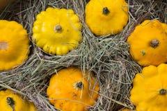 Courge jaune de Patty Pan montrée au farmer& x27 ; marché de s Courge de potiron Photographie stock libre de droits