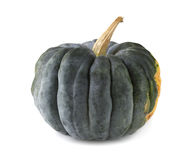 Courge noire de Futsu Photos stock