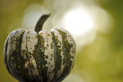 Courge verte et blanche Photo stock