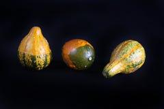 Courges colorées. Photos libres de droits