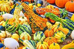 Courges colorées Photo libre de droits