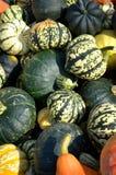 Courges colorées d'automne Photo stock