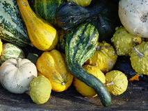 Courges d'automne Images stock