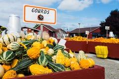 Courges et potirons au marché de ferme Photo libre de droits