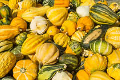 Courges et potirons ornementaux images stock