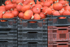 Courges rouges image stock