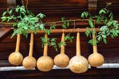 Courges sèches accrochant sur les faisceaux dans une maison Images stock