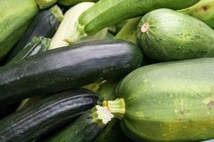 Courgette Foto de Stock Royalty Free
