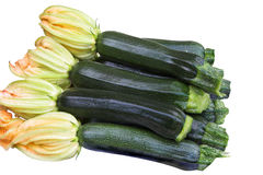 Courgette Royalty-vrije Stock Afbeelding