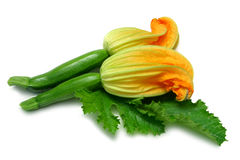 Courgette avec la fleur Photo stock