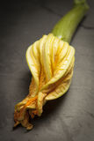Courgette. A courgette on a dark surface Stock Images