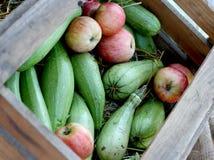 Courgette et pommes vertes dans la boîte en bois images libres de droits