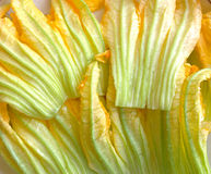 Courgette flowers Stock Photography