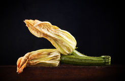 Courgette flowers Royalty Free Stock Images