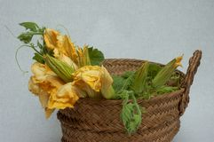 Basket Filled with Courgette Flowers stock images