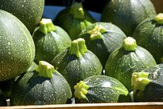 Courgette Royalty Free Stock Image