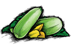Courgette. Vector courgettes with yellow flower Royalty Free Stock Photos