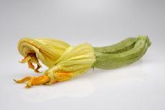 Courgettes с цветками Стоковое фото RF