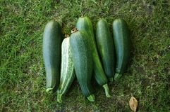 Courgettes Stock Photo
