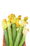 Courgettes  with flowers in brown basket isolated Stock Image