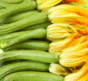 Courgettes or zucchini  with flowers Stock Photography