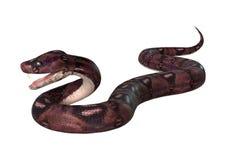 Courious Anaconda on White. 3D digital render of a curious anaconda isolated on white background royalty free stock photos