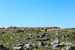 Courious Sheep in a mountain. A courious Sheep on the mountain Serra D'Aire e Candeeiros - Leiria - Portugal surrounded by limestone stones and marble watching stock photography