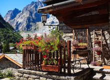 Courmayeur Monte Blanco Italy flowewrs. Moutain Royalty Free Stock Image