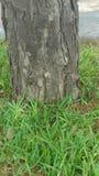 Couro cru em uma árvore fotos de stock royalty free